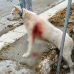 Καθηγητής μαχαίρωνε με μανία σκύλο στη μέση του δρόμου